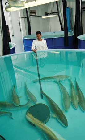 Aquaculture : plan de développement pour la ferme de Mahébourg