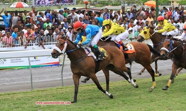 Hippisme 2014 : l'entraînement des chevaux a repris ce matin