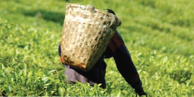 Un nouveau projet de loi pour remplacer la Food Act 1998