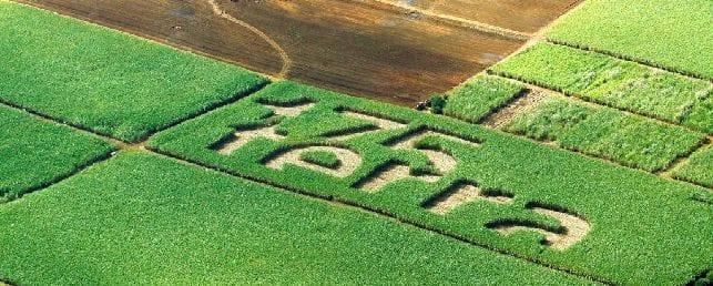 Terra sees 29.3% fall in 2013 pretax profit as sugar, energy segments disappoint