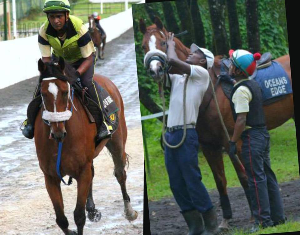 Deux chevaux de l'écurie Maigrot testés positifs à un produit interdit