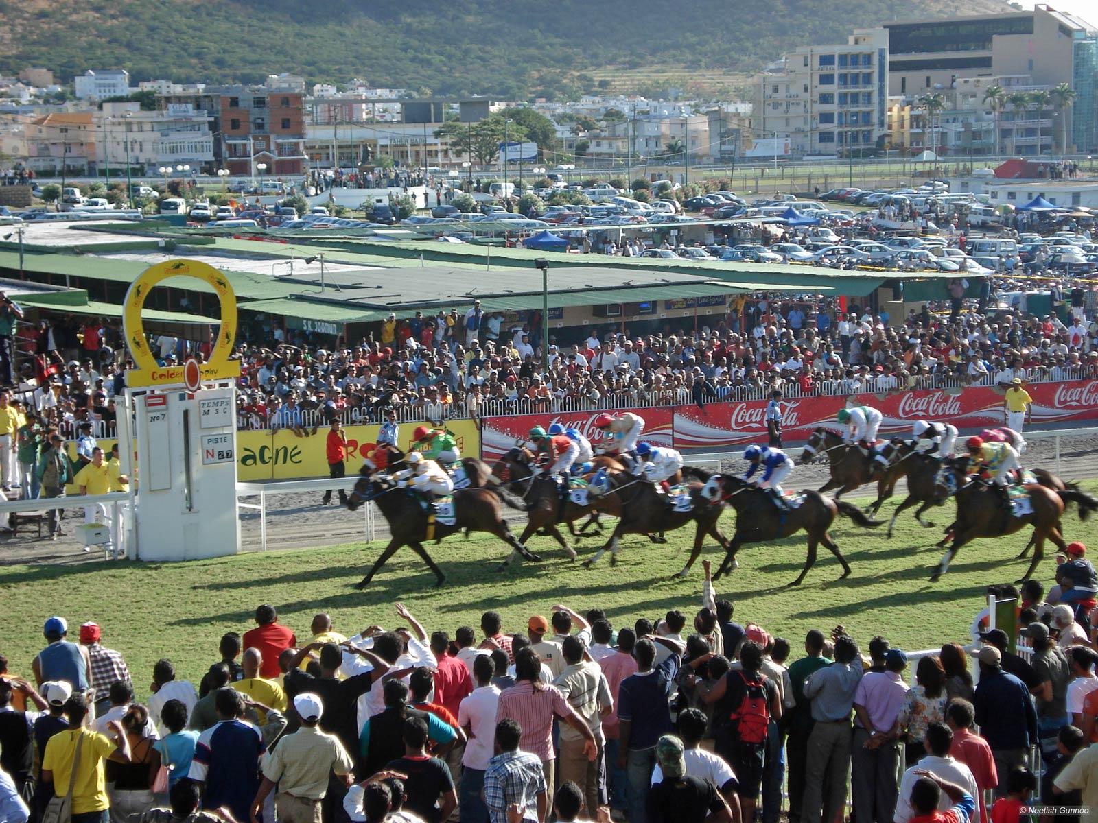 PML : Les propriétaires de chevaux ont jusqu'au 31 janvier pour soumettre leurs demandes