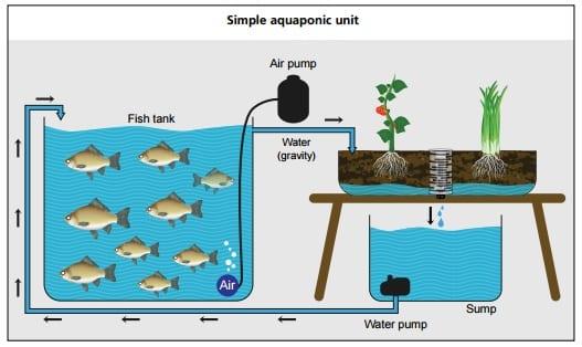 systeme-aquaponique-simple