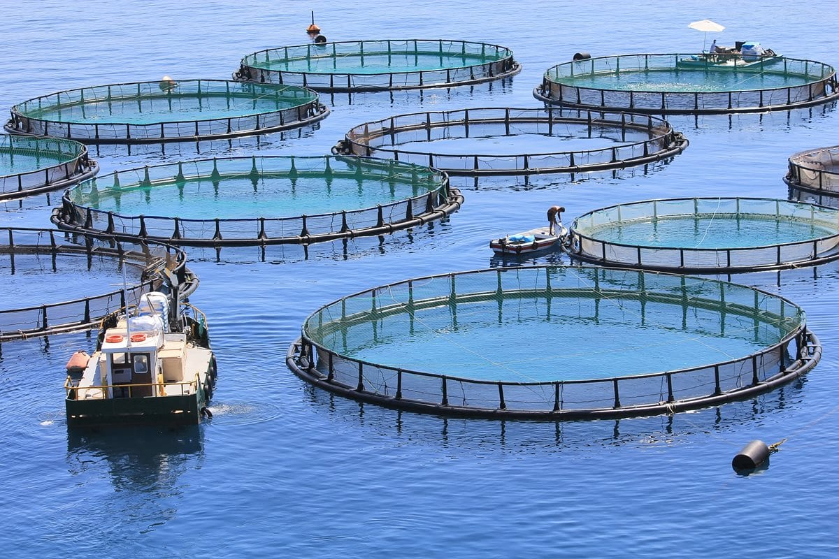 Aquaculture : Le tribunal de l'Environnement tranche contre Growfish