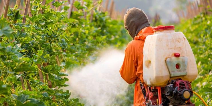 [Audio] Rodrigues interdira les pesticides chimiques d'ici décembre