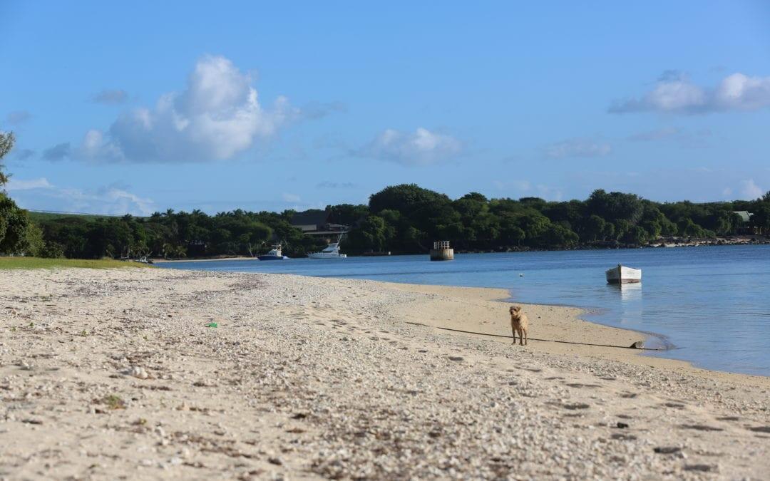 Le gouvernement et l'UNDP collaborent pour la restauration de l'écosystème marin