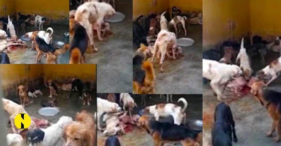 Dailymail.co.uk accuse MSAW de maltraitance d'animaux