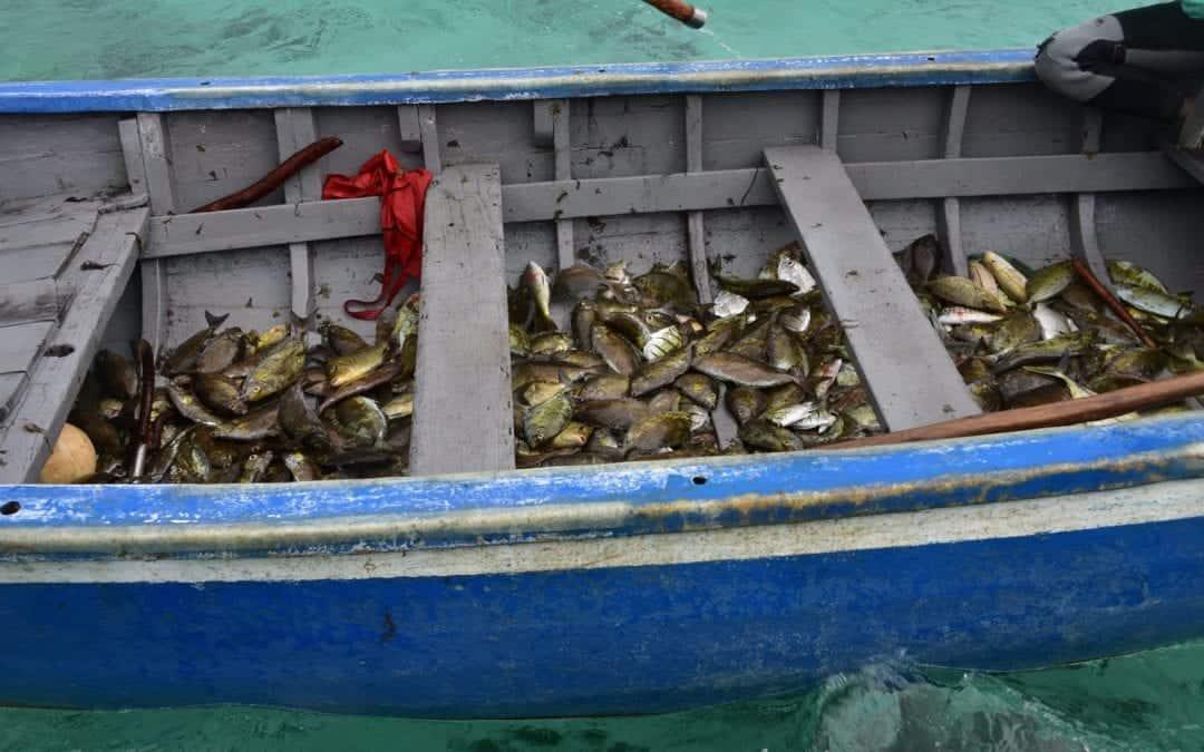À Poste-de-Flacq : Coup d'envoi de la pêche à la senne
