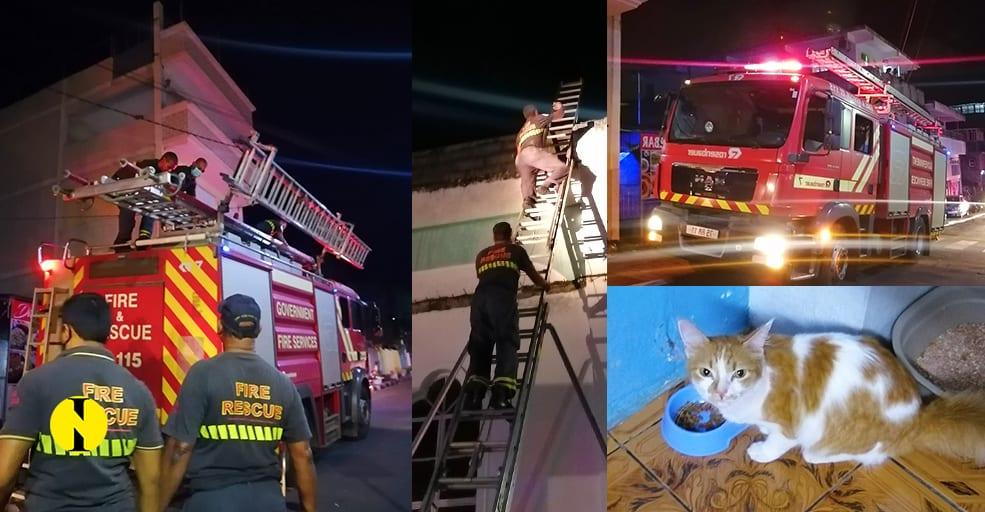 Des pompiers à la rescousse de « Princesse »
