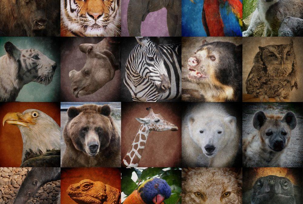 Journée internationale des espèces en voie de disparition