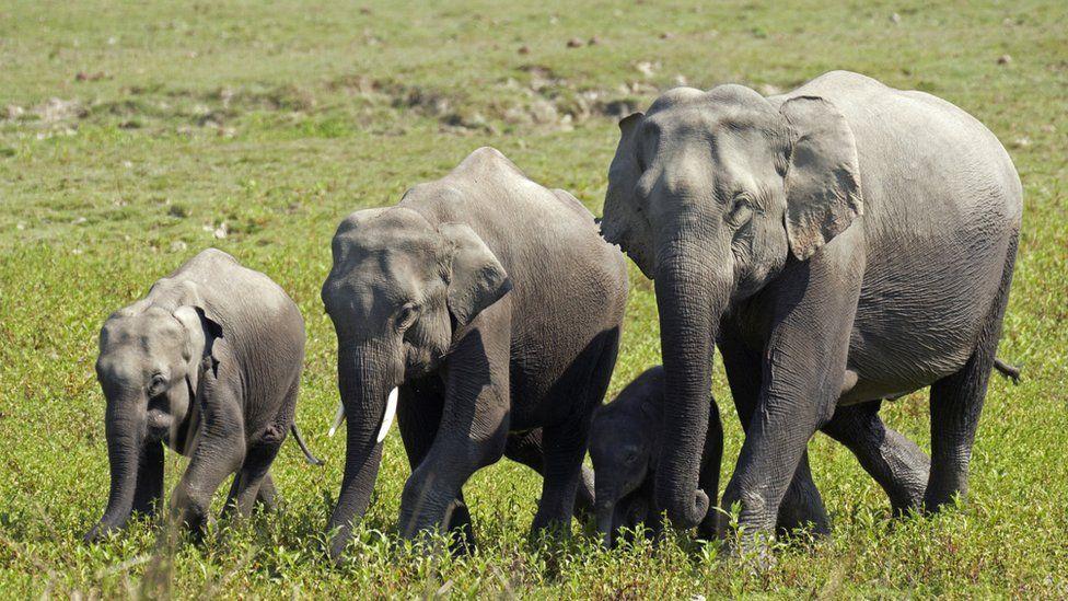 Un troupeau de 18 éléphants indiens meurt dans une forêt frappée par la foudre