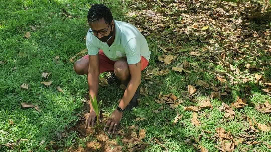 #plantatreechallenge : Plus de 1 000 arbres plantés par les équipes de Sun Resorts