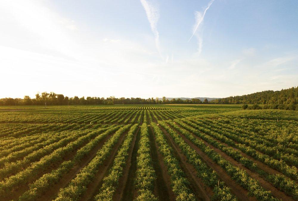Création d'une plate-forme de statistiques agricoles et nutritionnelles