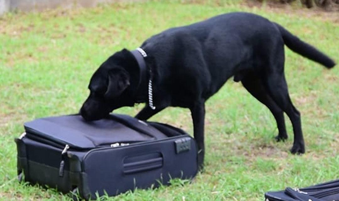 [La voix des internautes] Les chiens ne doivent jamais attaquer en dehors de leur territoire sauf sous l'ordre de leur maître