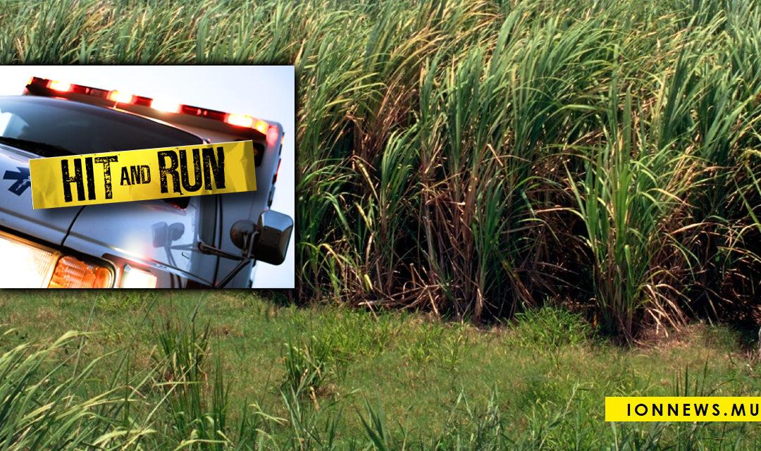 Hit and Run : Il se débarrasse du corps dans un champ de cannes