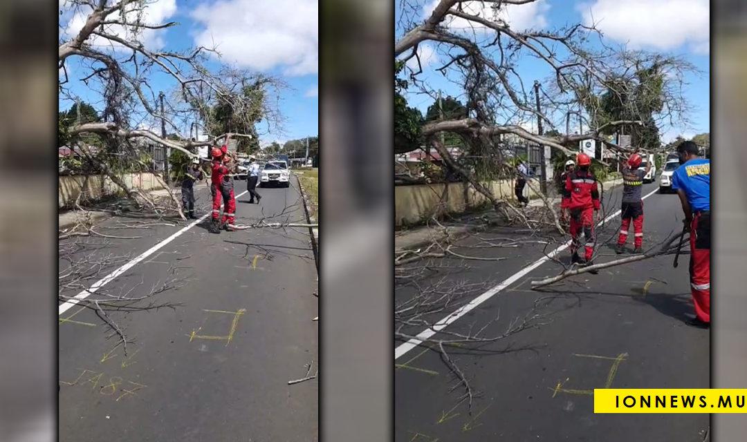 Un arbre tombe sur une voiture à la rue Vandermeersh, les pompiers sollicités