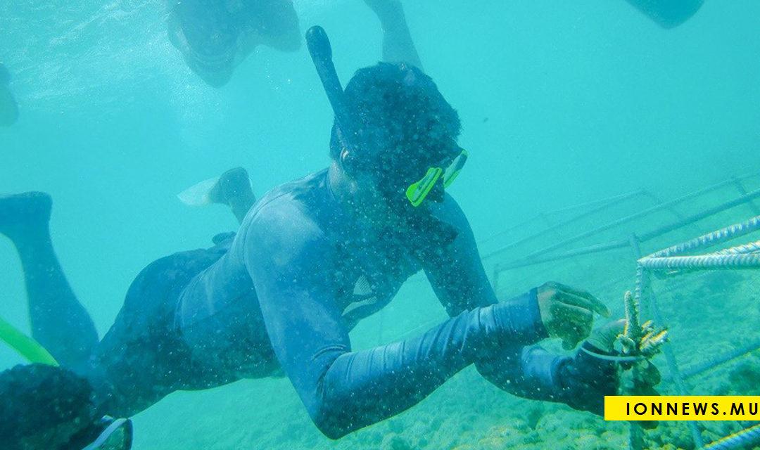 L'Université de Maurice et la Fondation Currimjee œuvrent à la réhabilitation du récif corallien