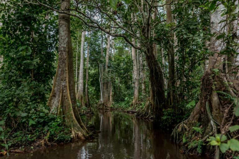 Maurice : 57 % des espèces d'arbres menacées