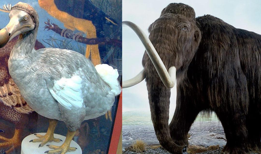 Le mammouth et le dodo ramenés à la vie grâce à la manipulation d'ADN
