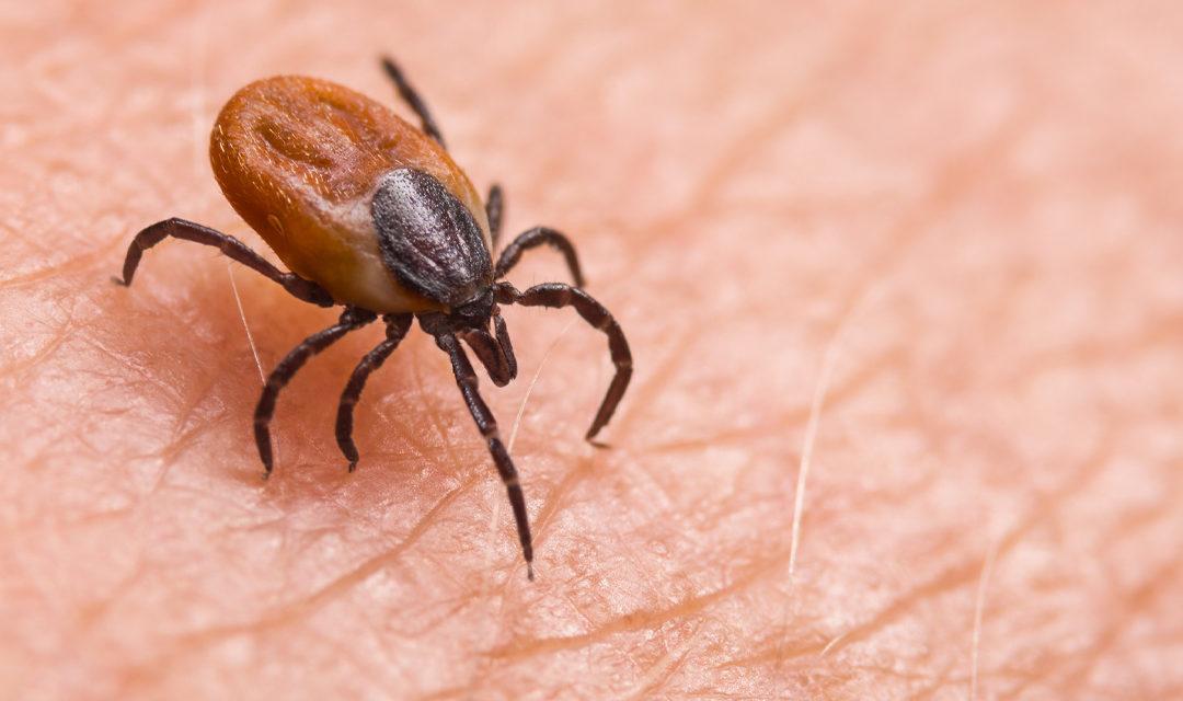 Virus Yezo : la nouvelle maladie qui inquiète le Japon